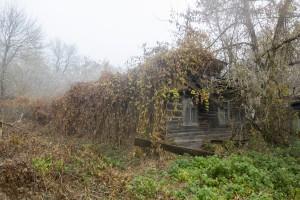 Overgrown house, village in Chernobyl area